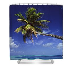 Bora Bora, Palm Tree Shower Curtain by Ron Dahlquist - Printscapes