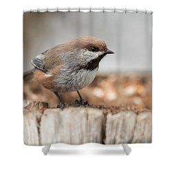 Boreal Chickadee Shower Curtain