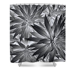 Shower Curtain featuring the photograph Botanical by Wayne Sherriff