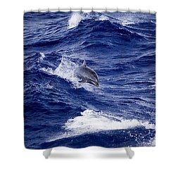 Bottlenose Dolphin Tursiops Truncatus Shower Curtain
