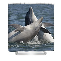 Bottlenose Dolphins  - Scotland  #15 Shower Curtain