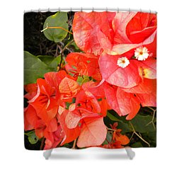 Bouganvilla 1 Shower Curtain by Renate Nadi Wesley