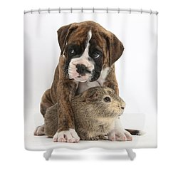 Boxer Puppy And Guinea Pig Shower Curtain by Mark Taylor