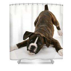 Brindle Boxer Pup Shower Curtain by Jane Burton
