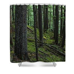 British Columbia Forest Shower Curtain