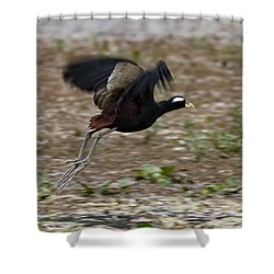 Bronze Winged Jacana  Shower Curtain
