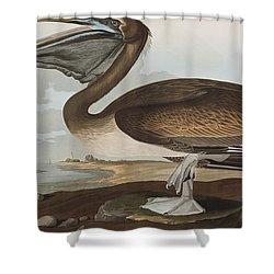 Brown Pelican Shower Curtain by John James Audubon