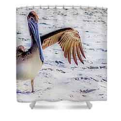 Brown Pelican Wave Shower Curtain