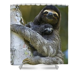 Shower Curtain featuring the photograph Brown-throated Three-toed Sloth by Suzi Eszterhas