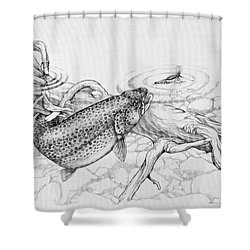 Brown Trout Pencil Study Shower Curtain