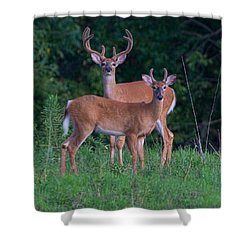 Buck Father And Son Shower Curtain