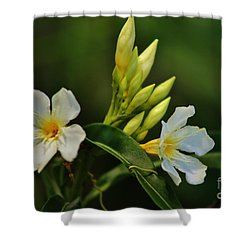 Shower Curtain featuring the photograph Buds And Blossoms by Craig Wood