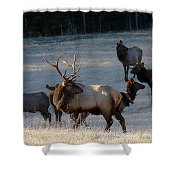 Shower Curtain featuring the photograph Bull Elk In Frost  by Michael Dougherty