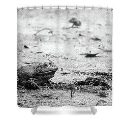 Bull Frog Shower Curtain