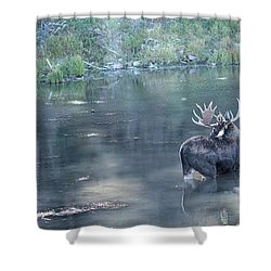 Bull Moose Reflection Shower Curtain