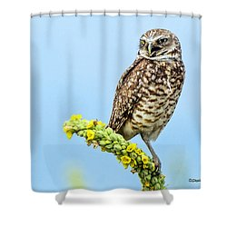 Burrowing Owl On Mullein Plant Shower Curtain
