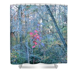 Shower Curtain featuring the photograph Burst Of Color by Kay Gilley