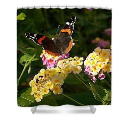 Shower Curtain featuring the photograph Busy Butterfly Side 2 by Felipe Adan Lerma