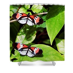 Butterflies Shower Curtain by Sandy Taylor