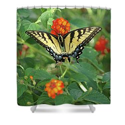 Shower Curtain featuring the photograph Butterfly And Flower by Debra Crank