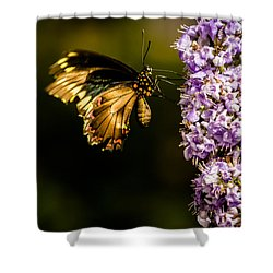 Butterfly Shower Curtain by Jay Stockhaus