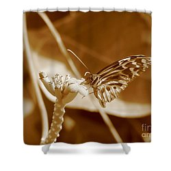 Shower Curtain featuring the photograph Butterfly by Michael Krek