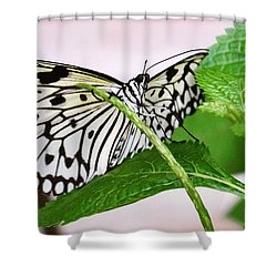 Paper Kite Butterfly No. 1 Shower Curtain
