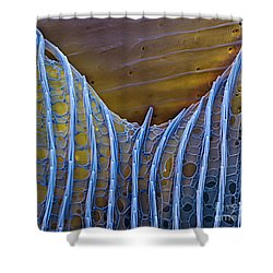 Butterfly Wing Scale Sem Shower Curtain by Eye of Science
