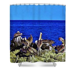 Cabo Pelicans Shower Curtain by John Wartman