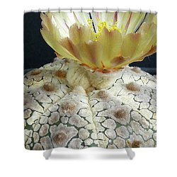 Cactus Flower 1 Shower Curtain by Selena Boron