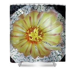 Cactus Flower 2 Shower Curtain by Selena Boron