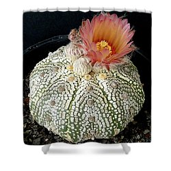 Cactus Flower 4 Shower Curtain by Selena Boron