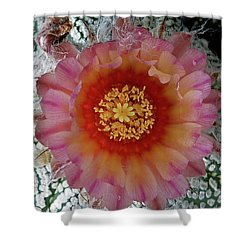 Cactus Flower 5 Shower Curtain by Selena Boron