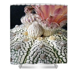 Cactus Flower 6 Shower Curtain by Selena Boron
