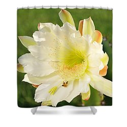 Shower Curtain featuring the photograph Cactus Flower With Bees by Bradford Martin