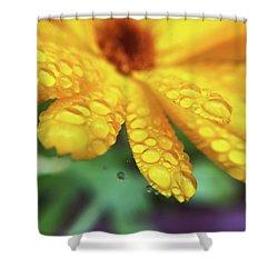 Calendula Officinalis Shower Curtain