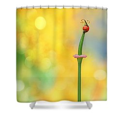 California Girls Shower Curtain by John Poon
