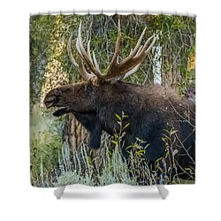 Calling All His Girls Shower Curtain by Yeates Photography