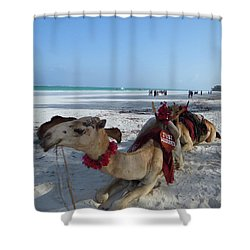 Camel On Beach Kenya Wedding Shower Curtain
