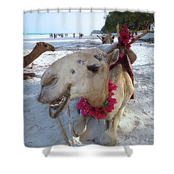 Camel On Beach Kenya Wedding3 Shower Curtain