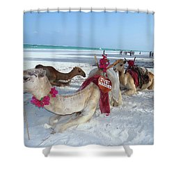 Camel On Beach Kenya Wedding4 Shower Curtain