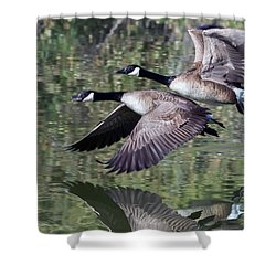 Canada Geese Shower Curtain by Tam Ryan