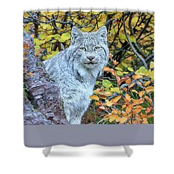 Canada Lynx Shower Curtain by Jack Bell