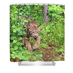 Canada Lynx Shower Curtain by Louise Heusinkveld