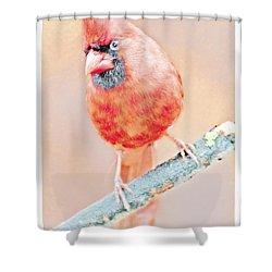 Shower Curtain featuring the photograph Cardinal Male by A Gurmankin