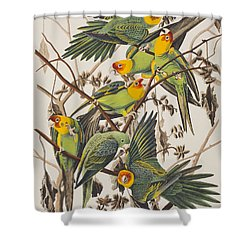 Carolina Parrot Shower Curtain by John James Audubon