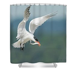 Caspian Tern With Fish Shower Curtain