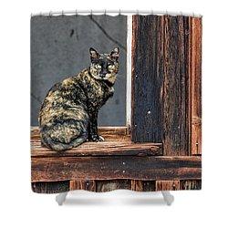 Cat In A Window Shower Curtain