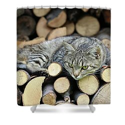 Shower Curtain featuring the photograph Cat Resting On A Heap Of Logs by Michal Boubin