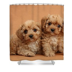 Cavapoo Pups Shower Curtain by Mark Taylor